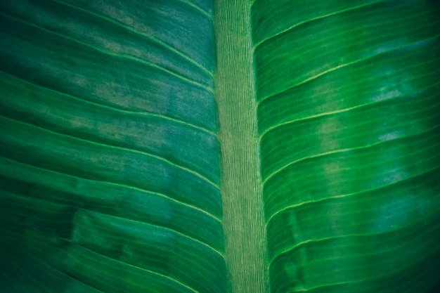 Close-up foliage of tropical leaf in dark green texture