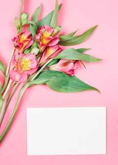 Close-up of fresh beautiful alstroemeria flowers with buds near the blank white card on pink background