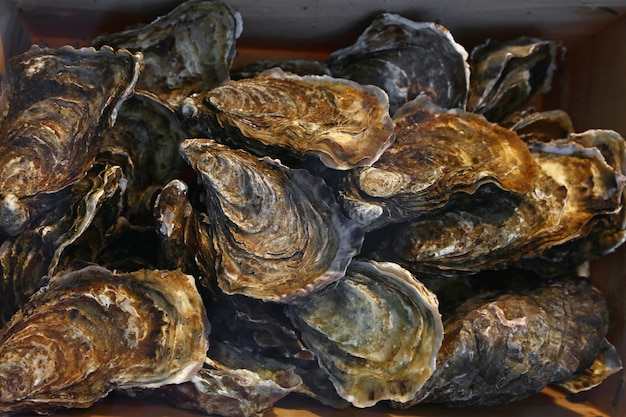 Close up fresh catch of raw oysters on retail display of fisherman market, high angle view