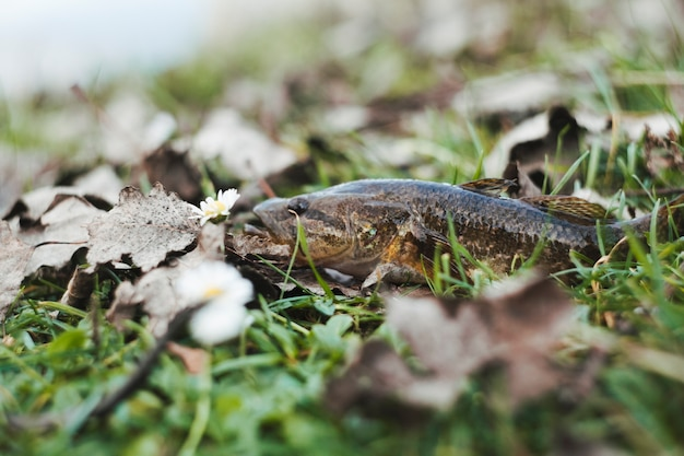 Close-up of a fresh fish on grass