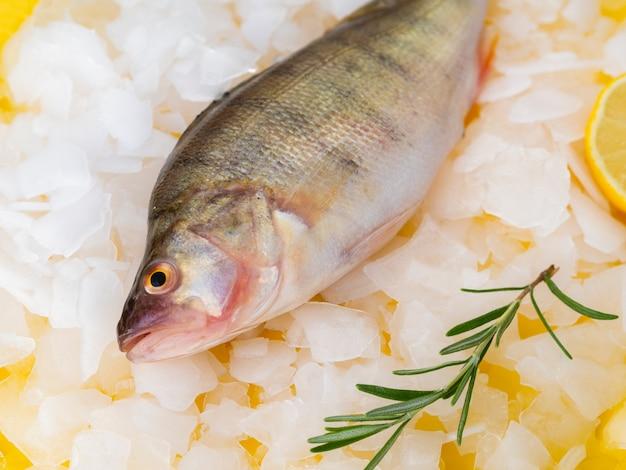 Close-up fresh fish ready to be coocked