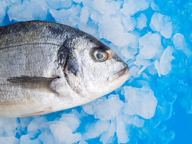 Close-up fresh fish with gills on ice