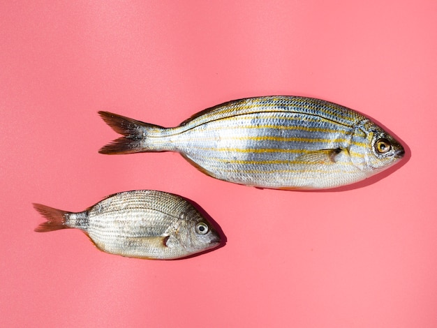 아가미와 근접 신선한 생선