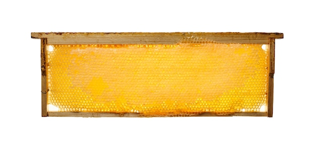Close up fresh golden comb honey wooden frame isolated on white background, side view