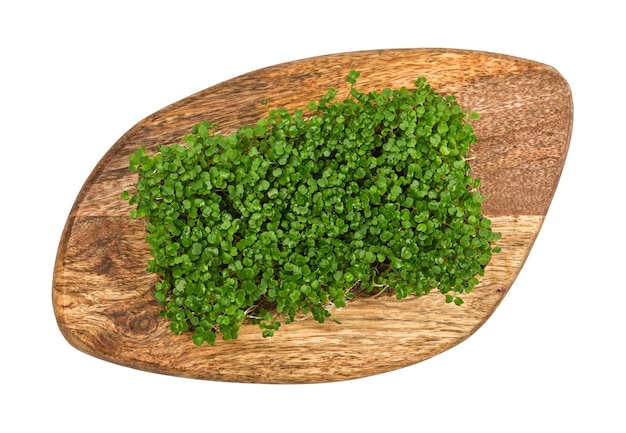 Close up fresh green arugula microgreens sprouts on brown wooden cutting board isolated on white background, elevated top view, directly above
