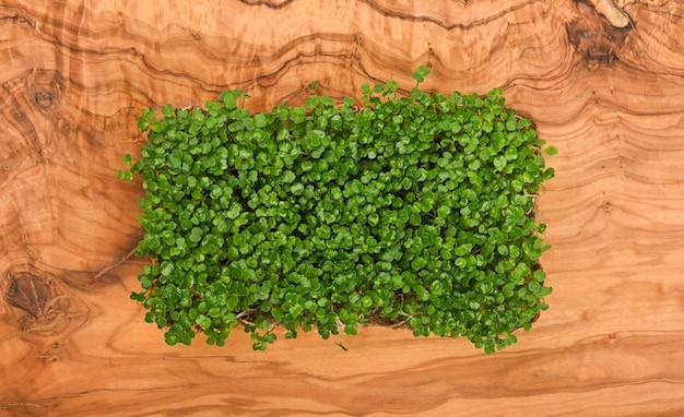 갈색 나무 커팅 보드에 신선한 녹색 arugula microgreens 콩나물을 닫습니다.