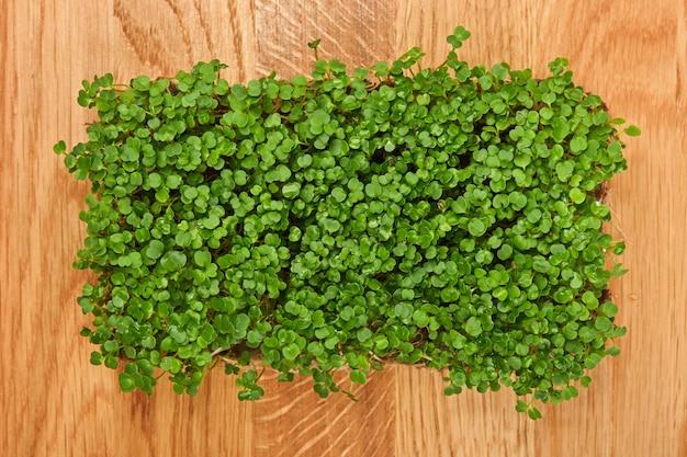 나무 커팅 보드에 신선한 녹색 아루굴라 마이크로그린 콩나물을 닫습니다