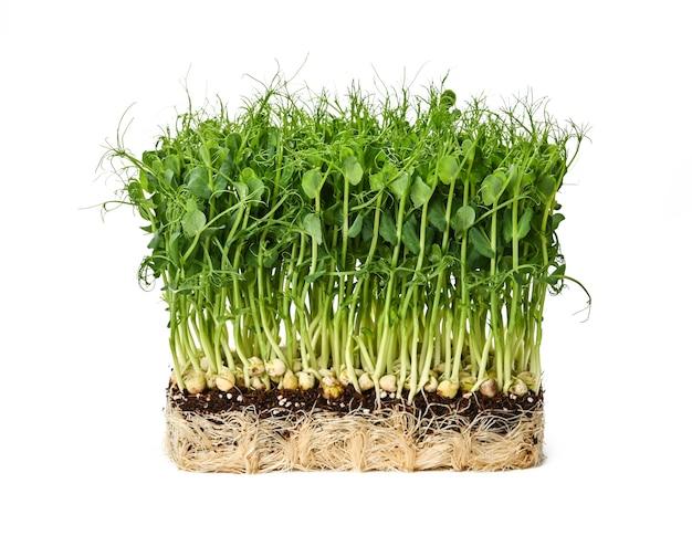 Закройте вверх по росткам микрозелени свежего зеленого горошка в коричневой деревянной коробке, изолированной на белом, низкий угол, вид сбоку
