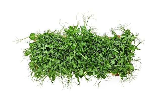 흰색 배경에 고립 된 나무 상자에 신선한 녹색 완두콩 미세 녹색 콩나물을 닫습니다