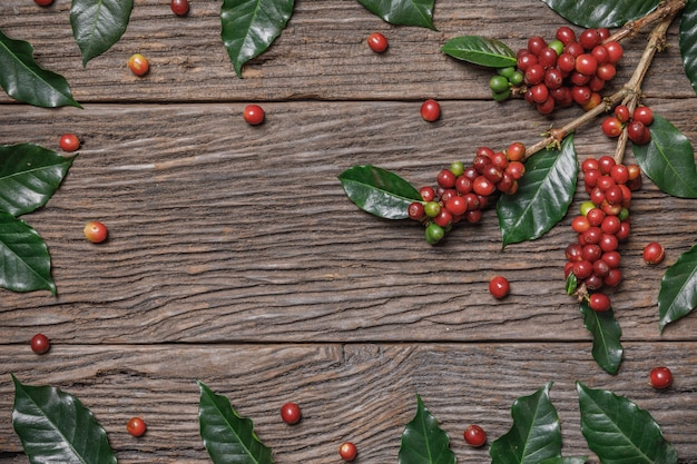 Close up fresh organic red coffee beans with coffee leaves on wooden background with copy space