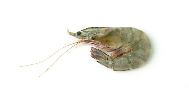 Close up fresh raw pacific white shrimp