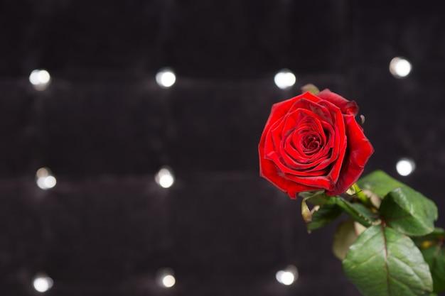 正面の輝く黒い背景に新鮮な赤いバラの花をクローズアップ