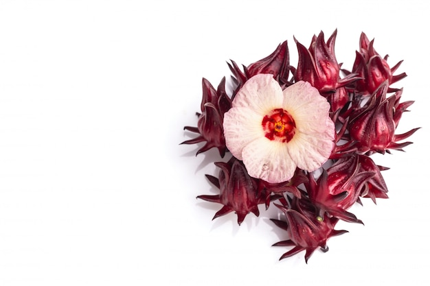 Close up fresh red roselle studio shot isolated on white