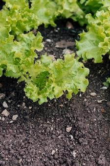 Close up fresh salad on the ground
