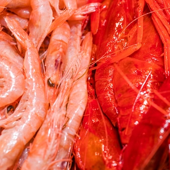 Close-up of fresh shrimps