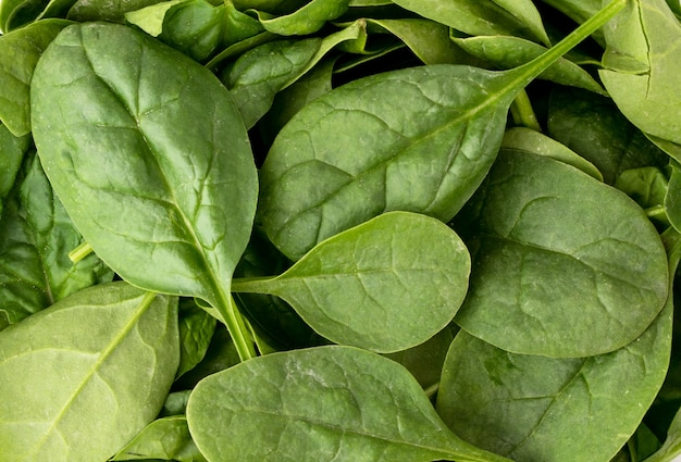 Close-up of fresh spinach leaves