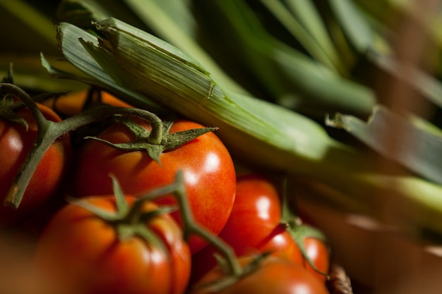 Close-up of fresh tomatoes and leafy vegetable
