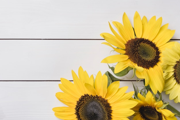 Close-up of fresh yellow sunflowers on white wooden background