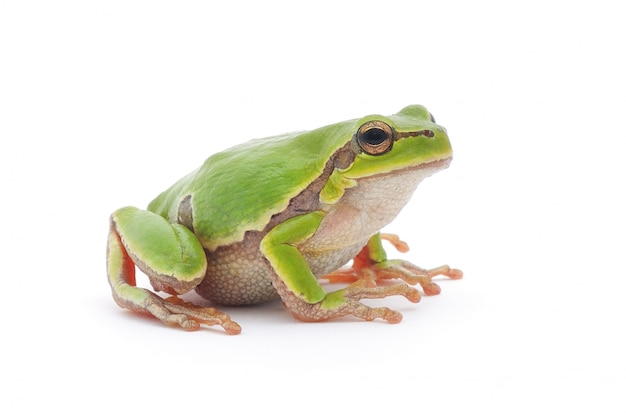 Close-up of a frog on bright background