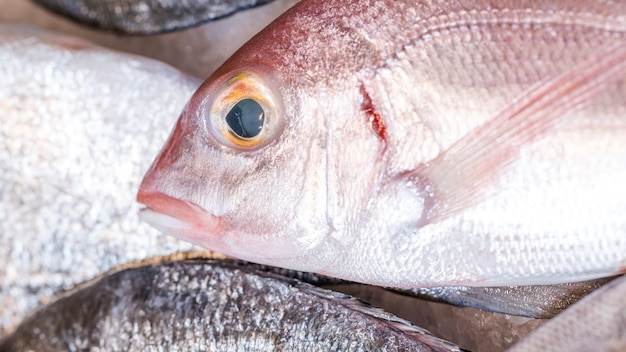 Close-up of frozen fish in market