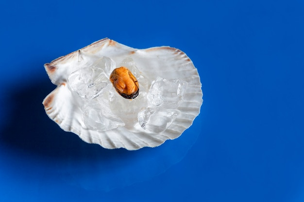 Close-up of frozen peeled mussel meat with crushed ice in shellfish shell on blue background