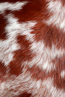 Close up fur of a goat background