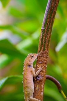 Close up garden lizard on a plant