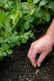 Close-up gardener putting seeds on soil