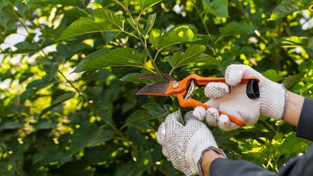 植物の世話をしている庭師をクローズアップ
