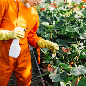 Close-up of a gardener with spray bottle examining plant in greenhouse