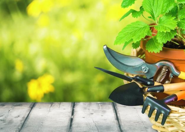 Крупным планом садовое оборудование и растения на деревянном столе