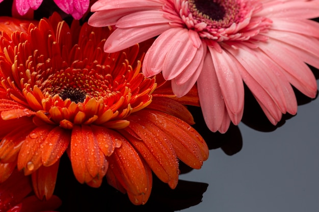 Close-up of gerbera flowers high view