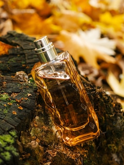 Close up glass bottle of aromatic woody luxury perfume on autumn background minimalistic packaging branding woody fragrance transparent glass cologne aroma template vertical view soft focus fall