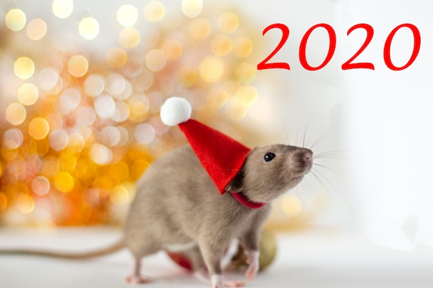 Close-up of golden brown cute little rat in a new year's hat on luminous yellow blur and christmas ball with the inscription 2020