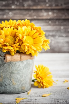 Close up of golden yellow chrysanthemum