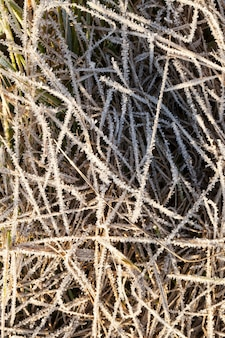 Close-up, grass covered with frost crystals