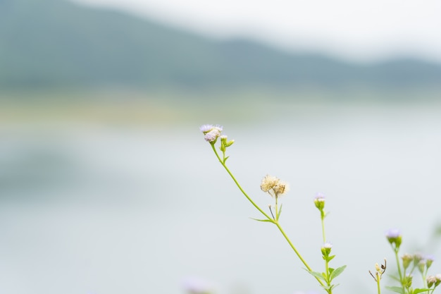 Close up of grass flower over dam.