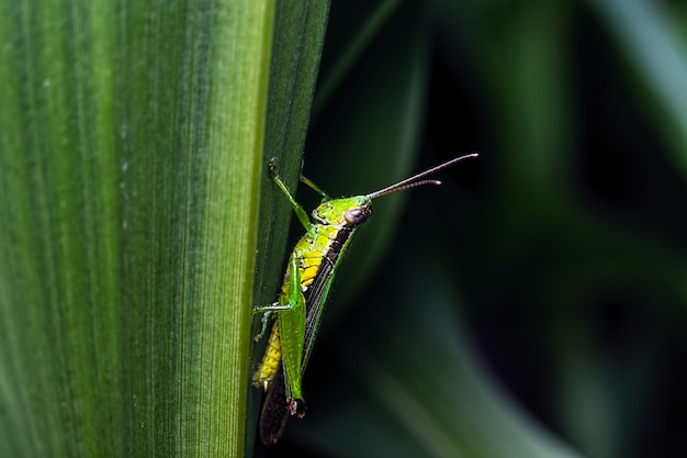 Close-up of grasshopper on a leaf