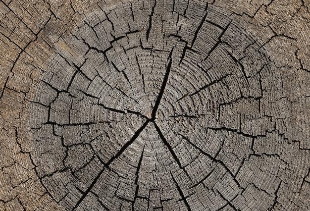 나무 분할 및 연륜 패턴이 있는 오래된 풍화된 나무 줄기 단면의 회색 배경 질감을 닫고 바로 위에 있는 위쪽 보기