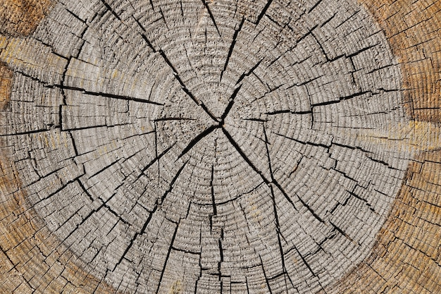 Close up gray background texture of old weathered tree trunk cross section with wood splits and annual rings pattern, elevated top view, directly above