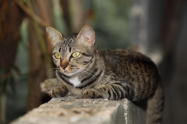 クローズアップ灰色の猫の家は座って、タイの庭の近くの古い壁に残り