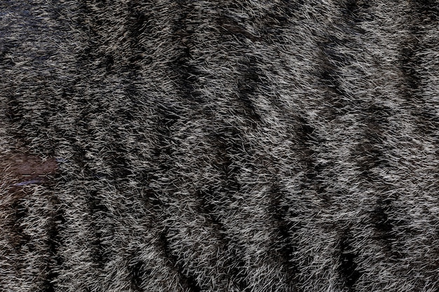 Закройте вверх по серой коже кота для кота и предпосылки