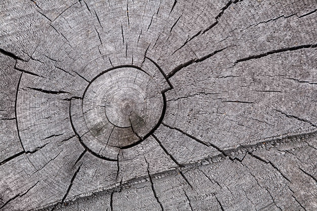 Close-up gray dry tree trunk, tree branches texture background