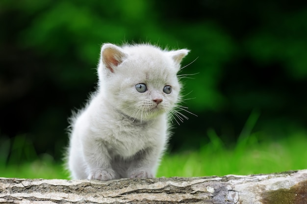 Close up of gray kitten on nature