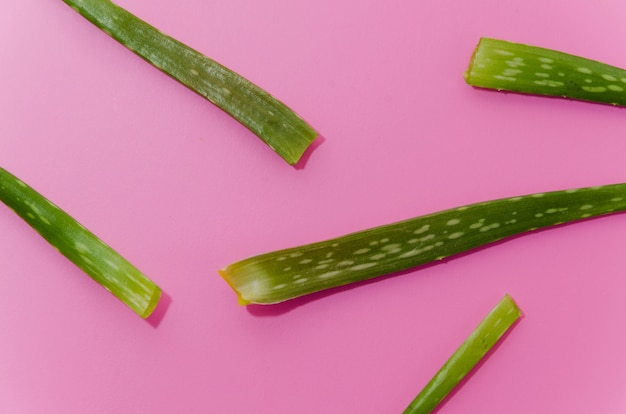 Close-up of green aloe vera leaves on pink background