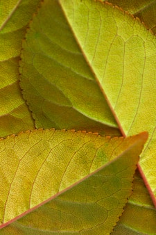 Close-up green and brown leaves