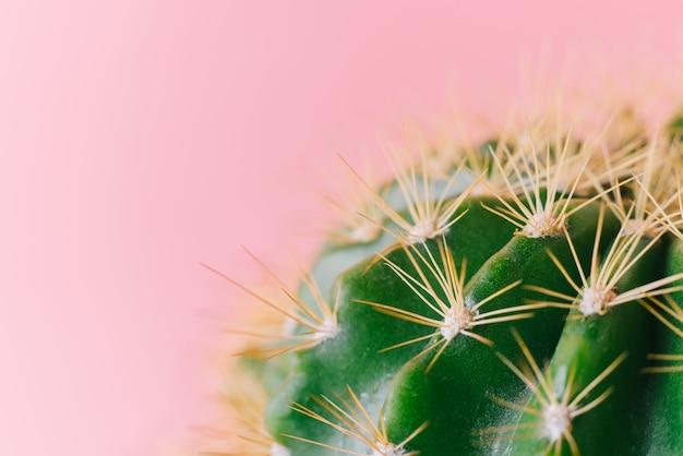 Крупным планом зеленый кактус на розовом фоне. минимальный декоративный завод на цветном фоне.