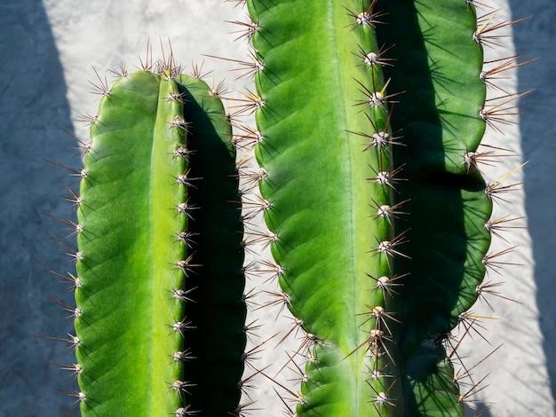 Крупным планом зеленый кактус на бетонной стене гранж в солнечный день