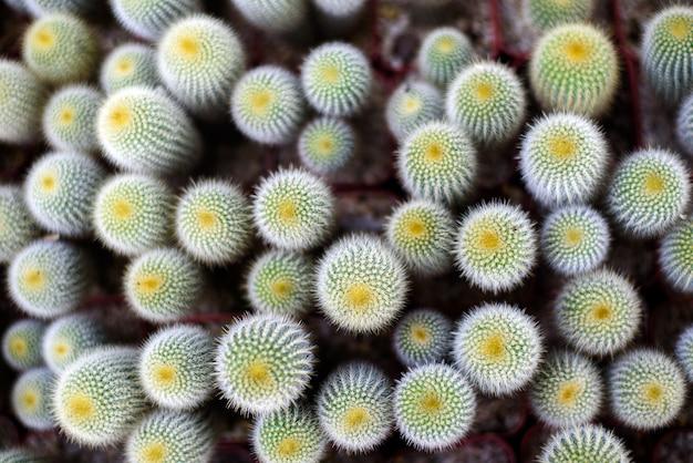Close-up green cactus pot, garden plant