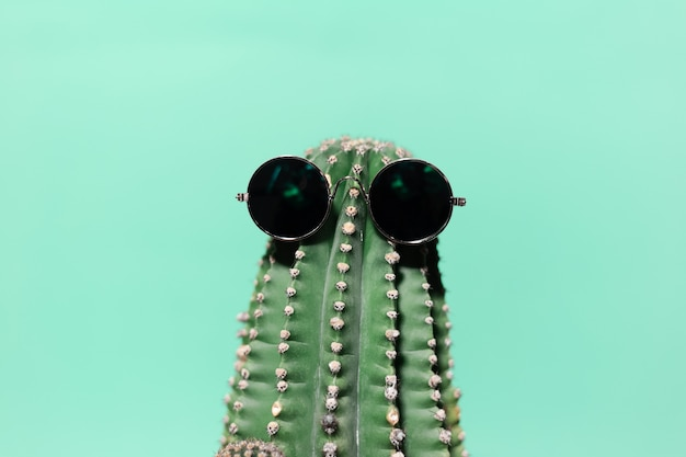 Close-up  green cactus wearing sunglass, isolated on wall of aqua menthe color.